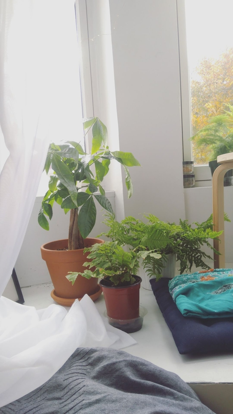 small trees and ferns by my window at home.